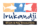 Shark Encounters Logo