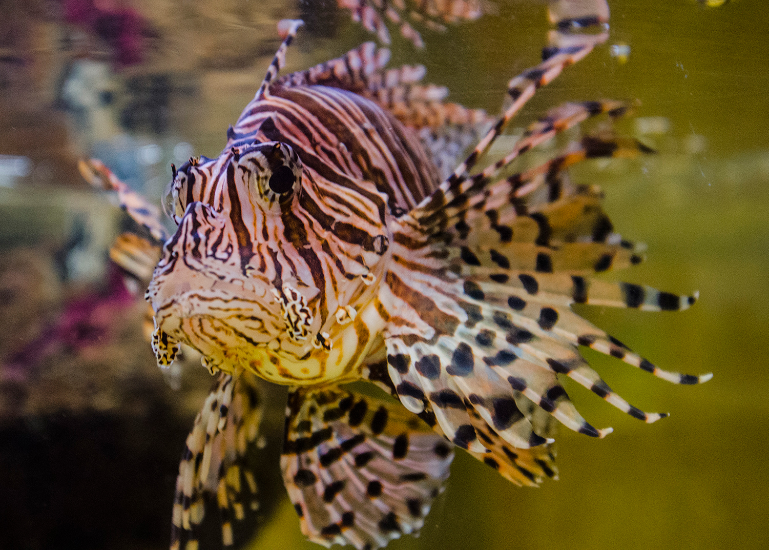 A new aquarium is coming to Anna Bay
