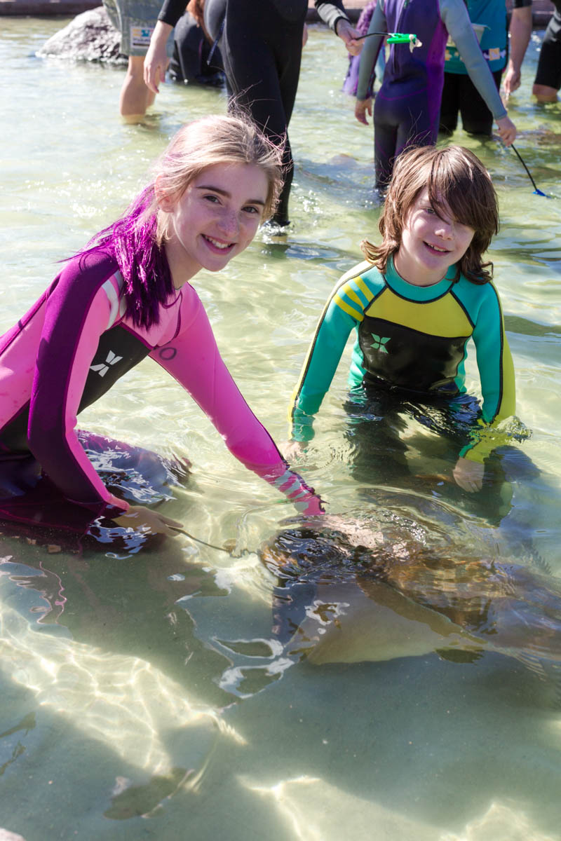 children feeding sharks and rays