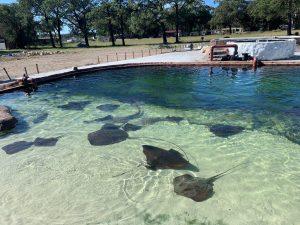 irukandji aquarium
