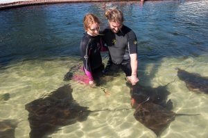 feed rays in the lagoon