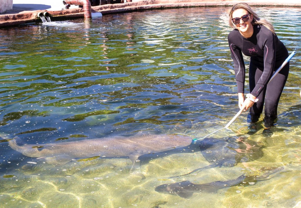 feed tawny nurse shark