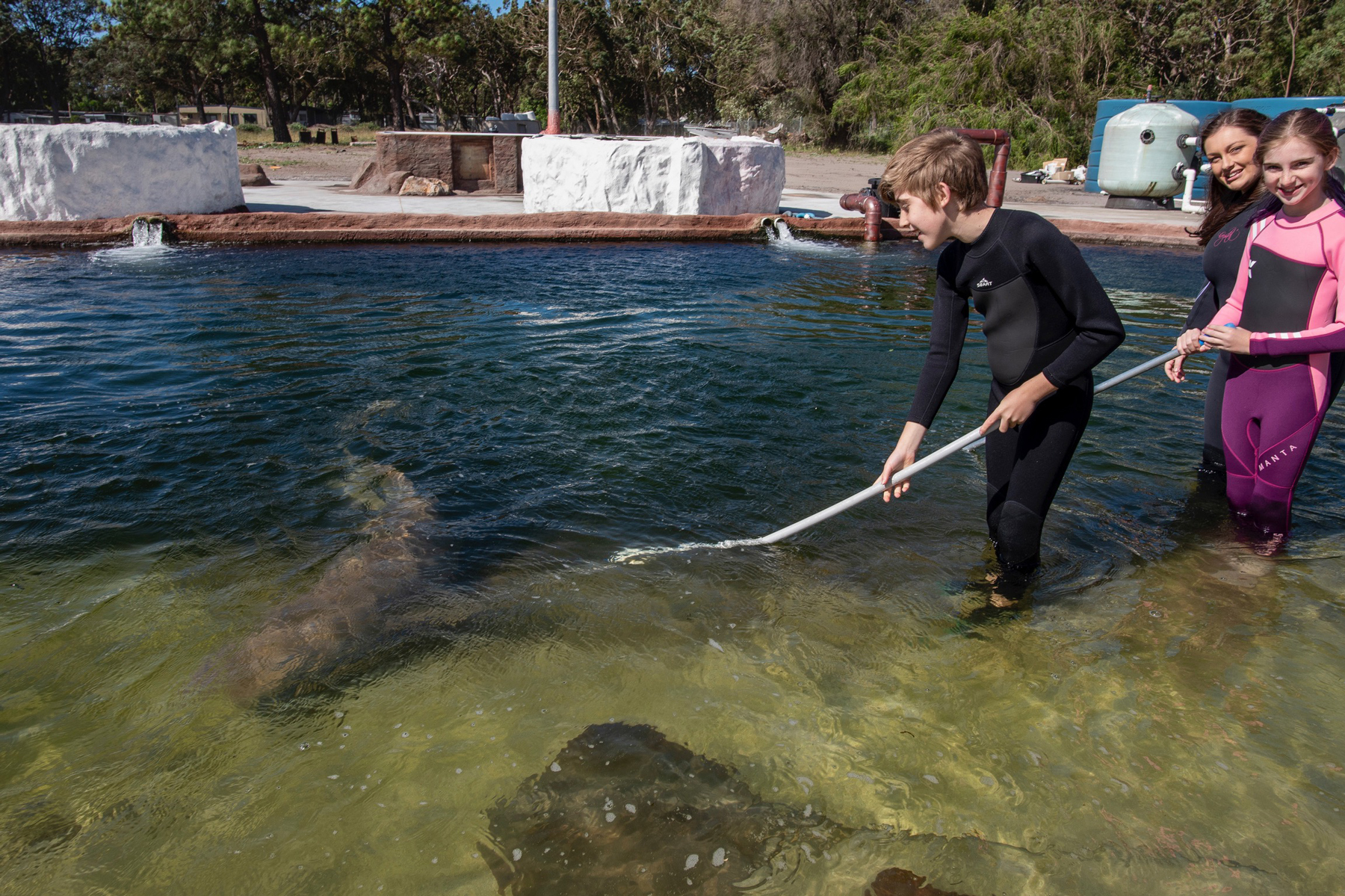 feed tawny nurse sharks