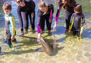 feed zebra sharks