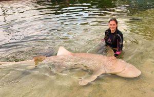 Feed tawny nurse sharks