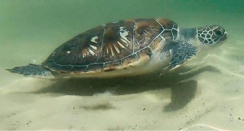 TURTLE OCEAN RELEASE