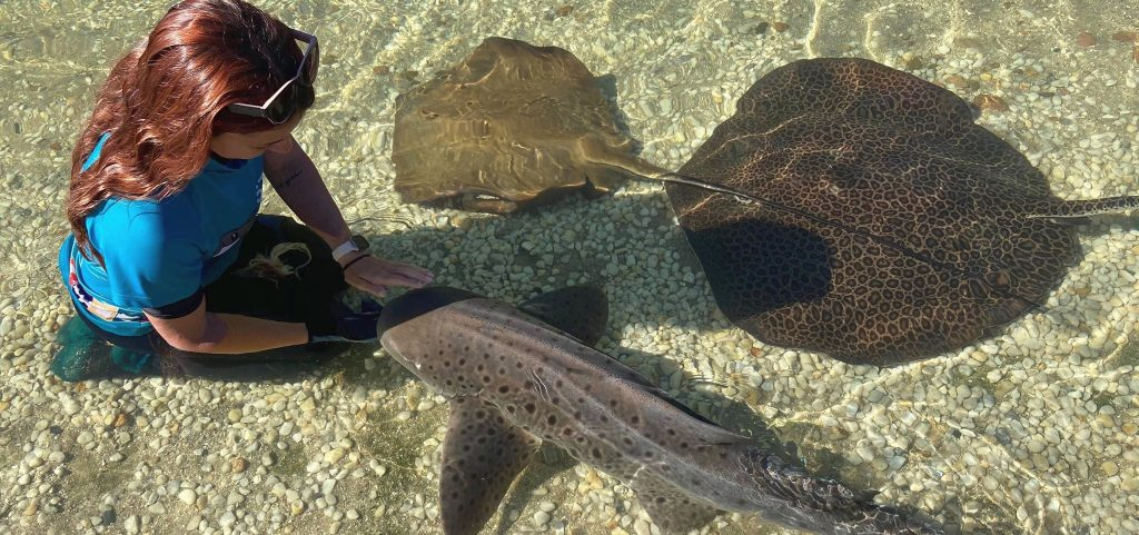 Embarking on a rewarding career at Irukandji Shark & Ray Encounters