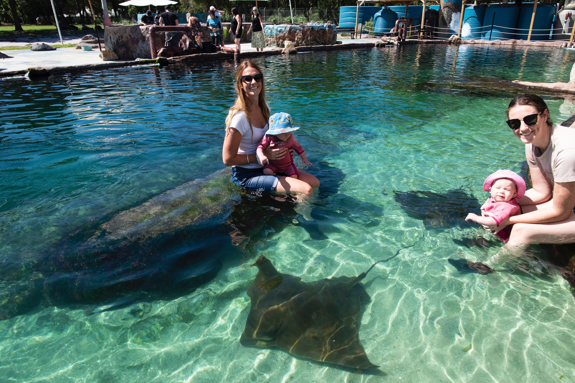 rays and sharks in port stephens