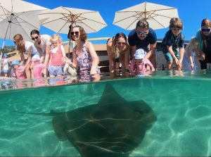 Feed sharks and rays