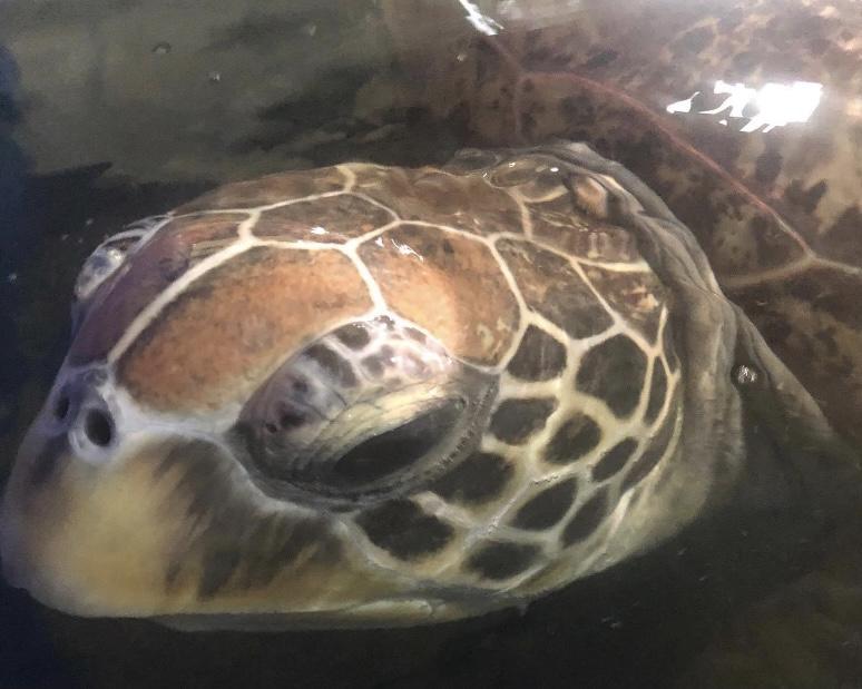 Sea turtle spottings Port Stephens
