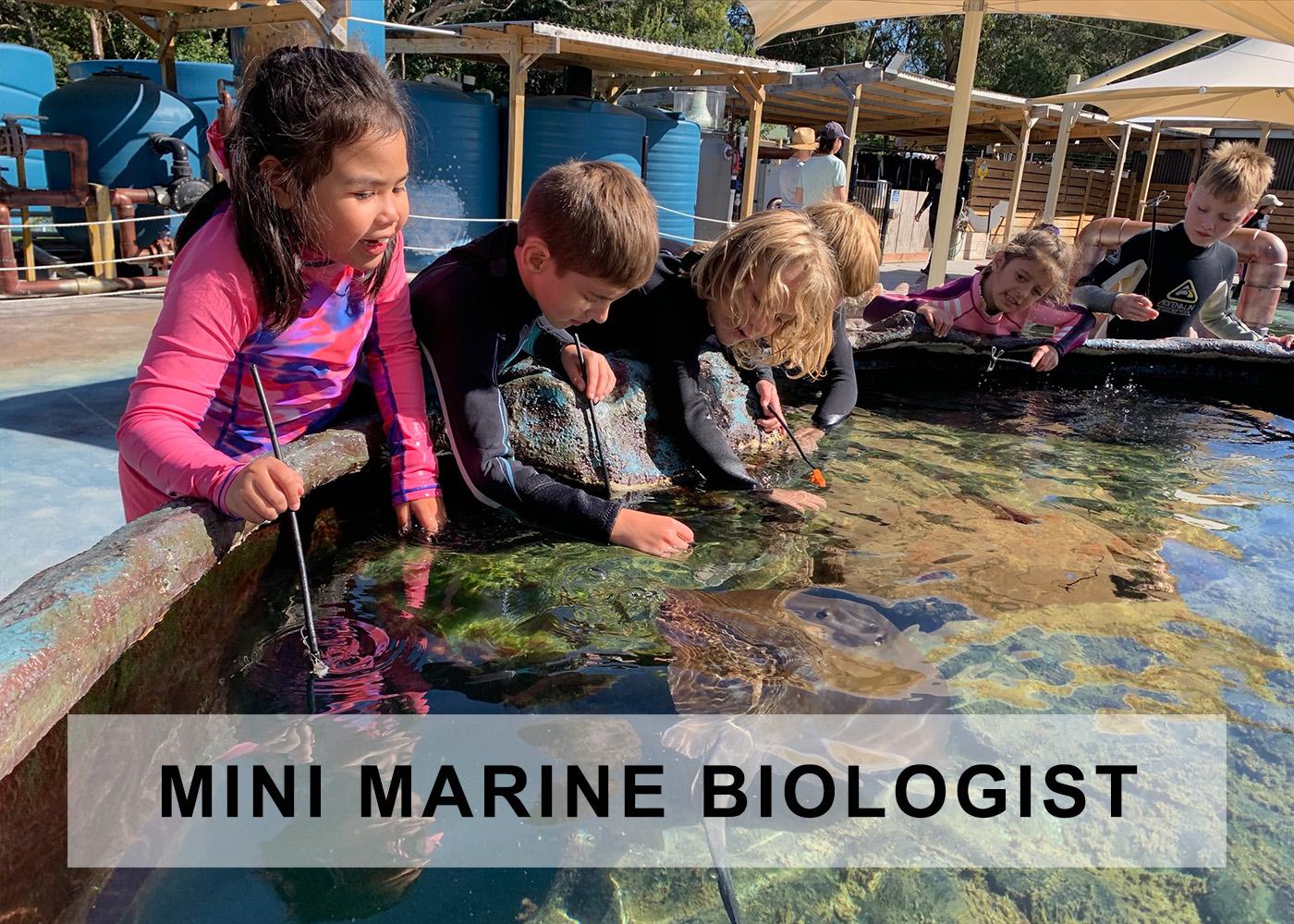 Mini Marine Biologist pass