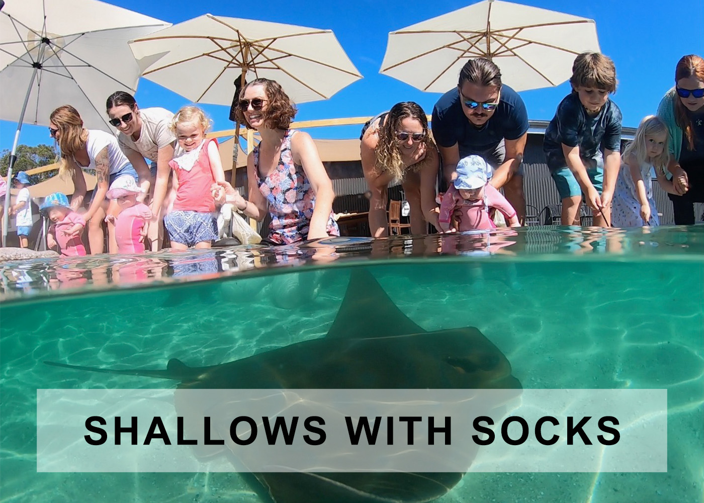 shallows encounter with rays