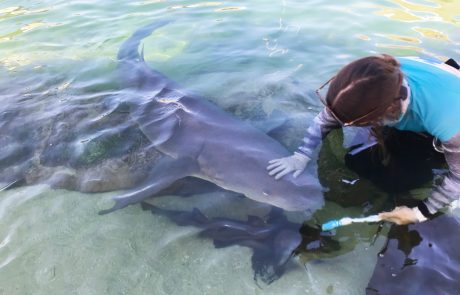 shark feeding port stephens