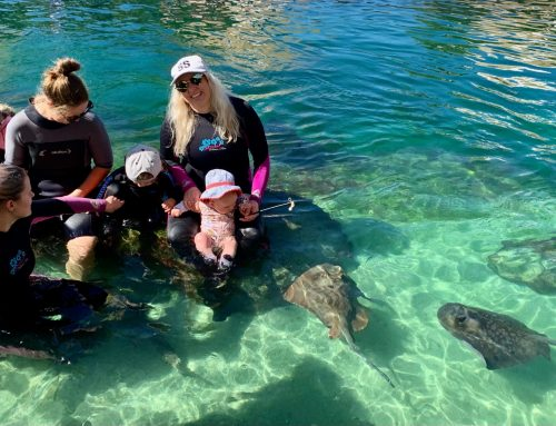 Locals Check out these Sharks in Port Stephens