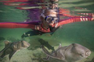Snorkel irukandji
