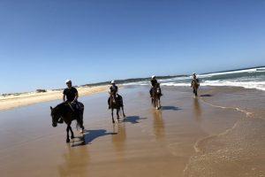 horse riding port stephens