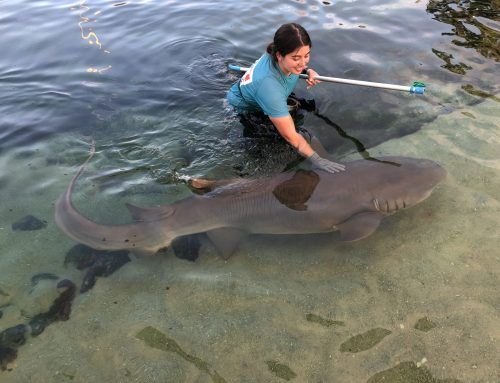 Caring for Sharks and Rays in Port Stephens