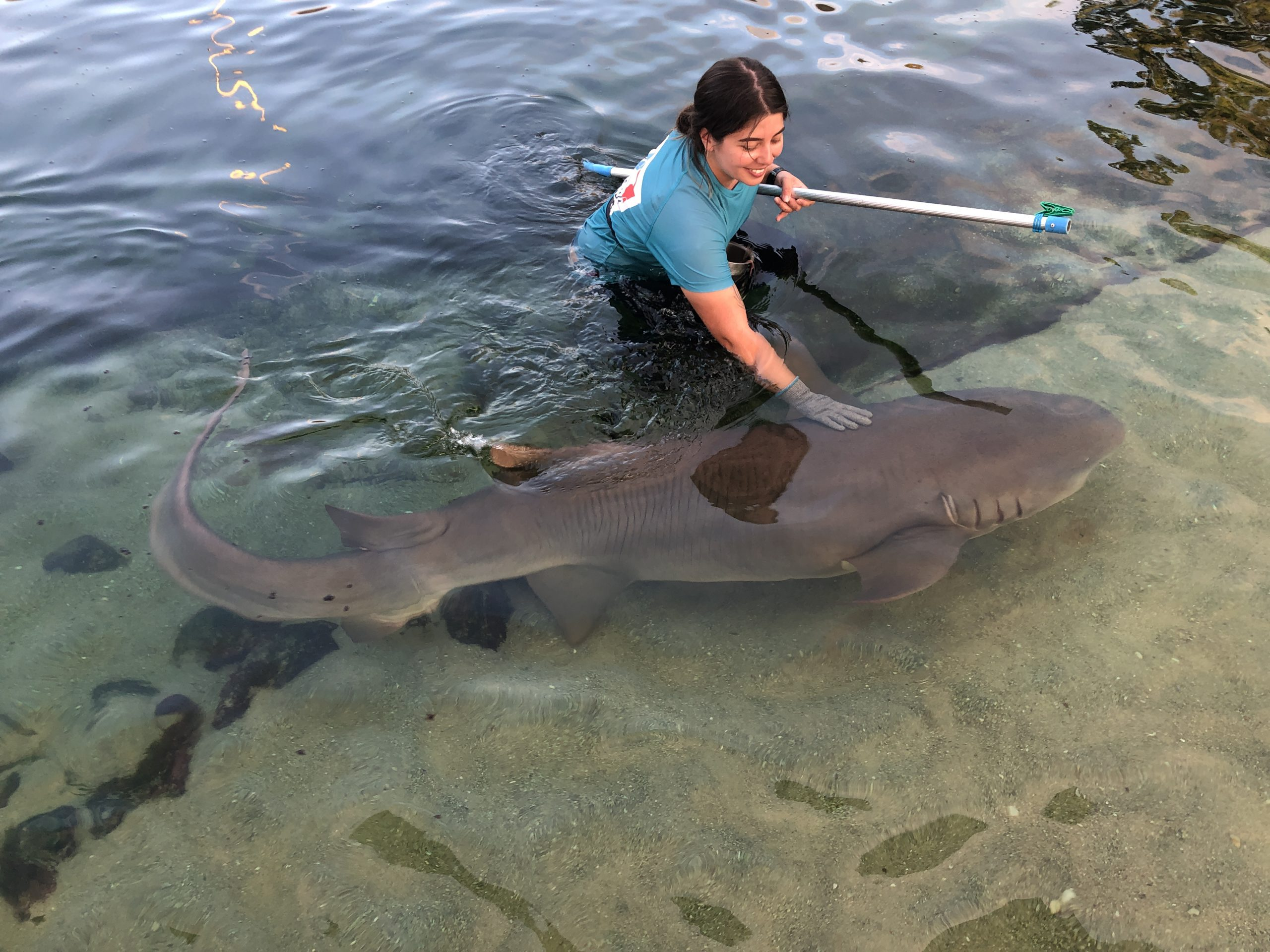 caring for sharks in Port Stephens
