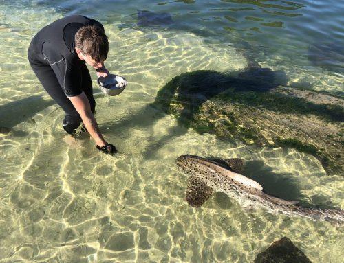 Spotting Sharks in Port Stephens